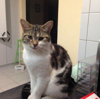 MISSING CAT - THEODORE