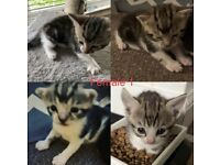 Five kittens ready for new home