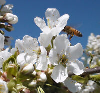 Beekeeping Workshop - INTRODUCTION TO THE LIFE - MAY 29th