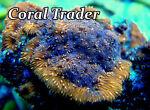 Coral Trader