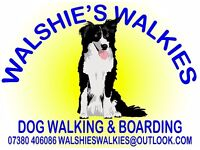 Fully insured, professional, reliable and experienced dog walker available Patchway/Abbeywood area.