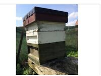 NATIONAL BEE HIVE WITH BEES