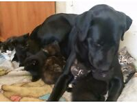 Six beautiful fluffy kitten's