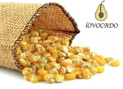 Organic Dry Corn Kernels / making Pop Corn / BEST Quality / Free P&P