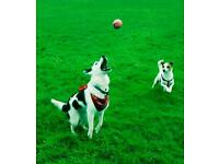 SW8 Dog Walker and Sitter/Cat Sitter