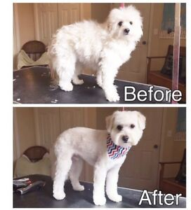 Certified Dog Groomer SOUTHWOOD/TUSCANY