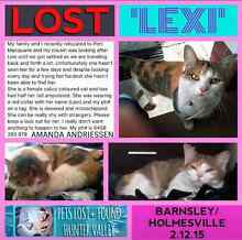 Missing cat Holmesville Lake Macquarie Area Preview
