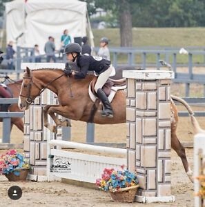 Hunter/Jumper Riding Lessons - School + Lease Horses Available