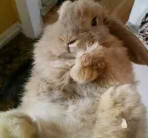 Looking to Re-Home My Bunny