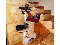 large solid cat tree enclosed dens and many platforms for cats to sleep on/suitable for 4/5 cats