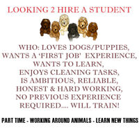 Hiring Part Time Student