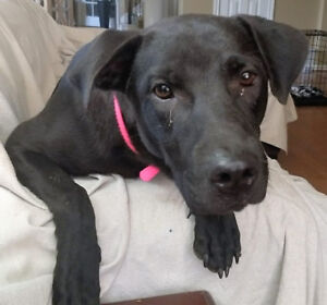 Lulu - from the streets to a comfy home with air conditioning!