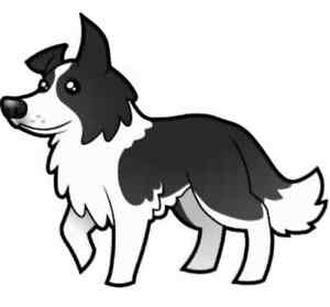 ISO: Border collie puppy