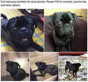 *** Unneutered and unspayed dogs *** Oakville / Halton Region Toronto (GTA) image 1