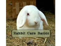 Free pet rabbit advice