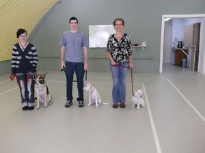 Session AUTOMNE Cours de chien en groupe