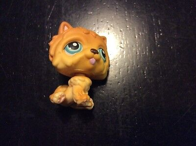 Littlest Pet Shop #117 Dog Chow Brown with Blue Eyes and Tongue Sticking Out