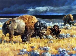 Nancy Glazier Restless Buffalo Bison Art Print  12