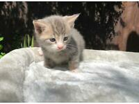 UPDATED 4 beautiful kittens for sale