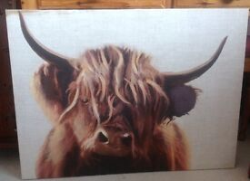 HIGHLAND COW CANVAS FROM NEXT