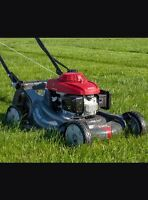 Lawn care for reminding summer!