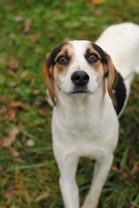 """Young Female Dog - Hound: """"Molly Moe"""""""