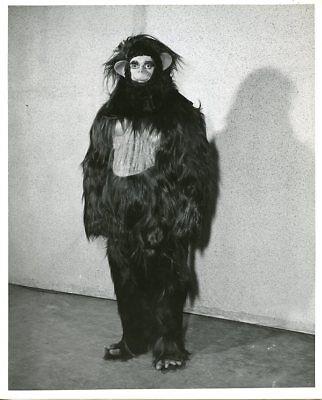 GORILLA IN MAKEUP PORTRAIT MASQUERADE PARTY GAME SHOW ORIGINAL 1956 NBC TV PHOTO - Gorilla Makeup