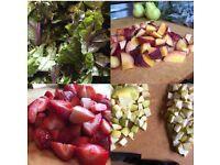 Food Prepping/Cook