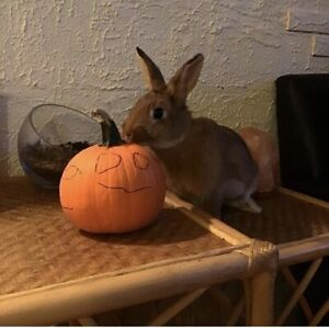 rabbit to re-home