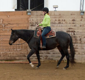 Horseback Riding Parties! Kitchener / Waterloo Kitchener Area image 1