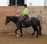 Special Price only $99 for Four Horseback Riding Lessons