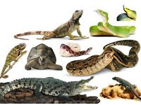 Looking to give a loveing home to reptiles free