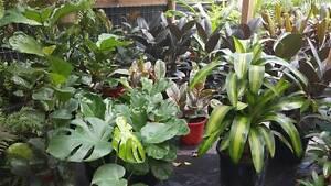 Top 10 Indoor Plants! Be inspired! Park Ridge Logan Area Preview