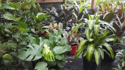 Top 10 Indoor Plants! Be inspired!