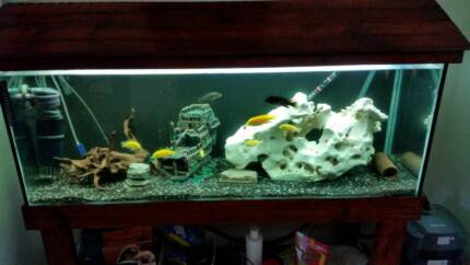 Aquariums - 4 Ft & 2 Ft, complete with fish