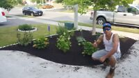 Yoe's landscaping planting and grass installation  647 219 7605