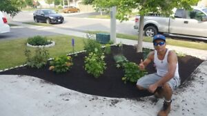 Yoe's Landscaping. Planting and grass installation  647 219 7605