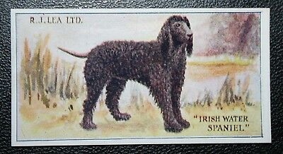 IRISH WATER SPANIEL   Superb  Original 1923  Vintage Colour Card