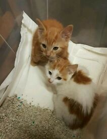 2 kittens 4 month old now