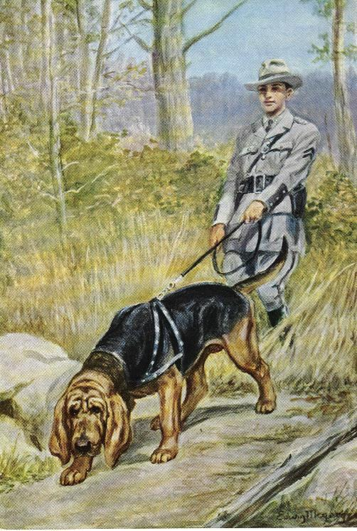 Bloodhound - Vintage Color Dog Print - MATTED