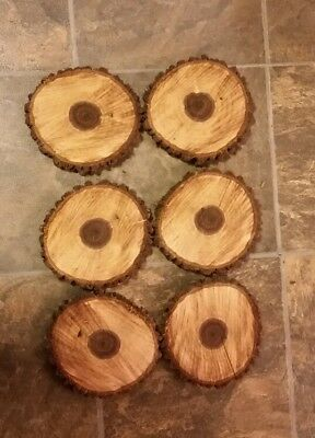 """LOT OF 6 Fresh Black Walnut Slabs Slice Tree Trunk 6"""" x 1"""" Rustic Wood"""