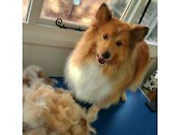 Professional Dog Grooming Service - 10% OFF FOR NEW CLIENTS