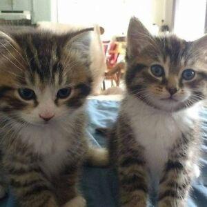 2 chattons de 4 mois frere et soeur