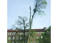 All aspects of tree work undertaken