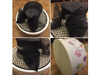 Ladies occasion hat