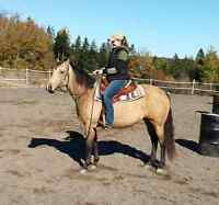 Quiet Quarter Horse-pony cross for sale
