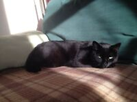 "LOST - ""Samson"" black 5yr old cat in SW17. Please call 07810564913 if you know where he might be."