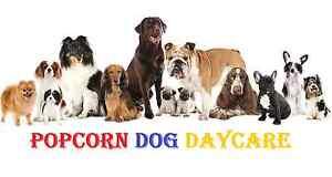 popcorn dog daycare Reservoir Darebin Area Preview