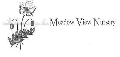 Meadowview Perennial Nursery