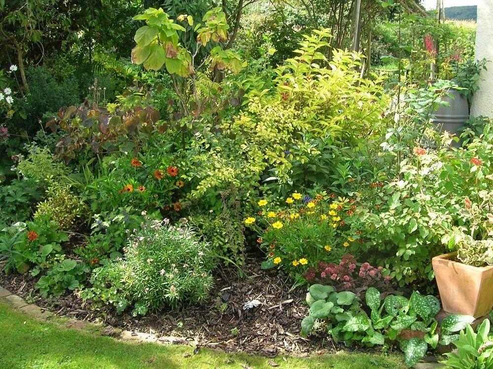 The Tree Garden Kent
